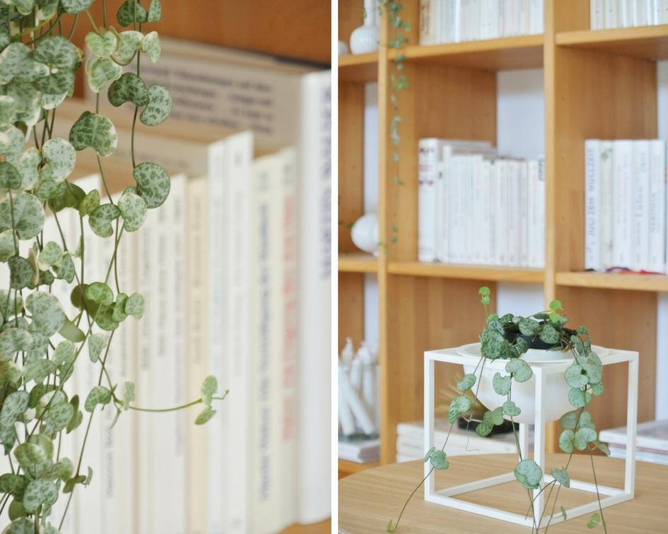 Bücherregal-nach-Farben-sortiert