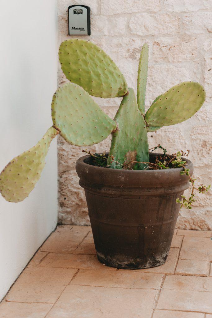 Ferienhaus-Apulien-Locorotondo-Kaktus